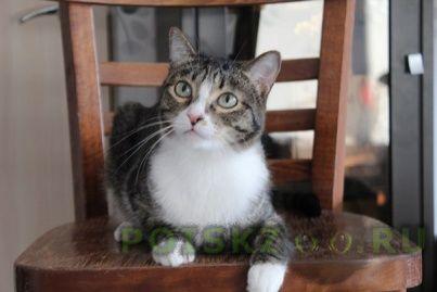 Найден кот г.Ханты-Мансийск
