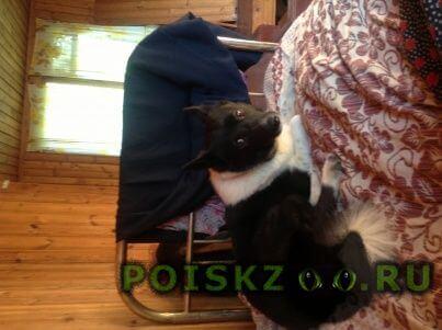 Пропала собака кобель ищу собака г.Нижний Новгород