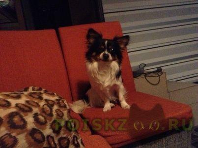 Найдена собака кобель г.Кимры