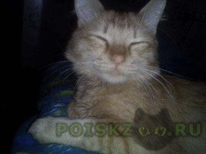 Пропал кот г.Егорьевск
