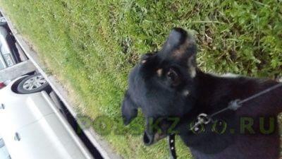 Найдена собака кобель нашли пса г.Уфа