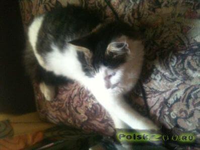 Пропал кот г.Петродворец