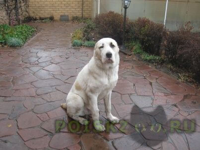 Пропала собака кобель г.Егорьевск