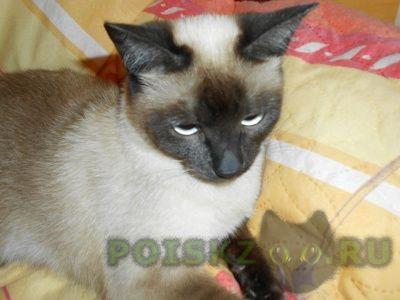 Пропала кошка г.Коломна