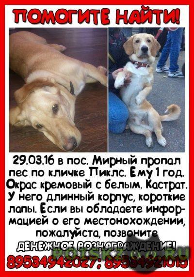 Пропала собака кобель помогите найти друга и члена семьи г.Казань