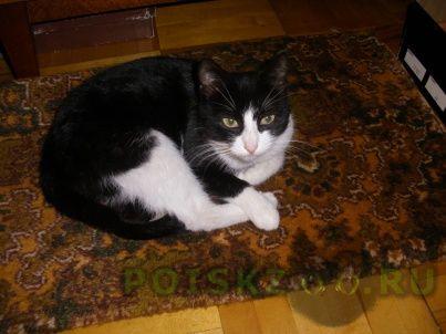 Найдена кошка г.Железнодорожный (Московск.)
