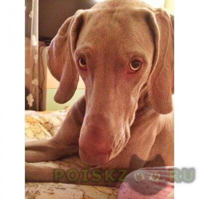 Пропала собака г.Гатчина