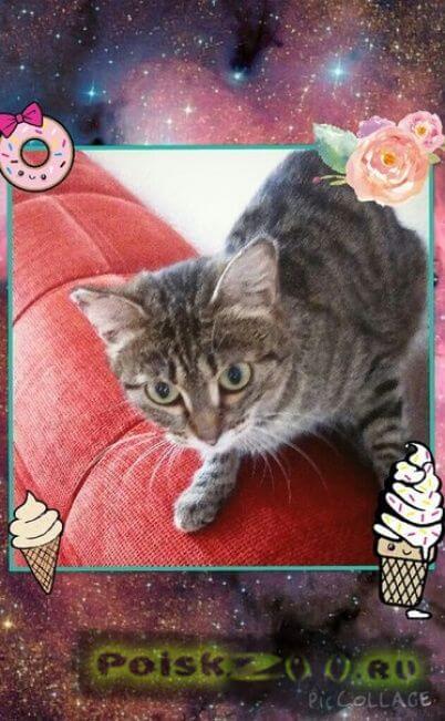 Найдена кошка г.Ханты-Мансийск