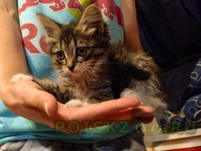 Найден кот г.Тюмень