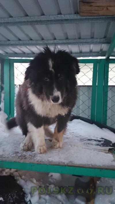 Найдена собака г.Ханты-Мансийск