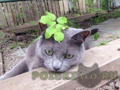 Пропал кот г.Санкт-Петербург
