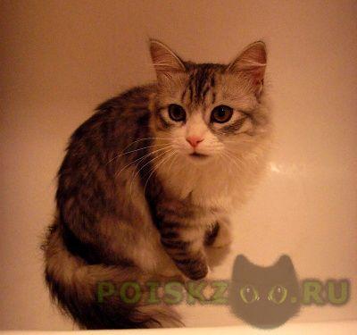 Пропал кот г.Зеленоград