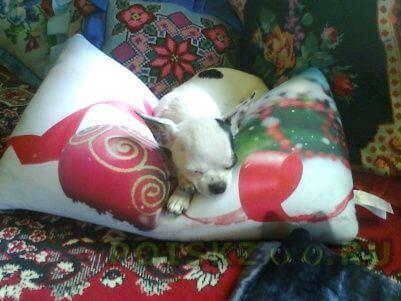 Пропала собака г.Железнодорожный (Московск.)