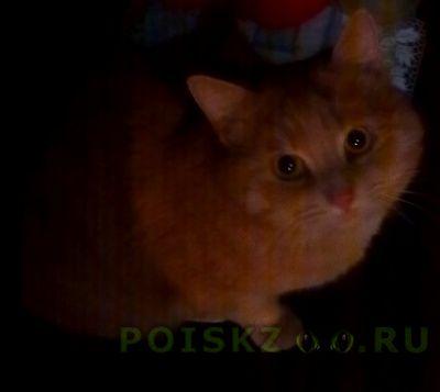 Пропал кот г.Тюмень