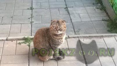 Найдена кошка г.Апрелевка