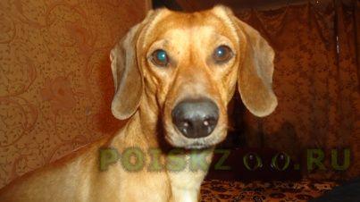 Пропала собака кобель г.Улан-Удэ