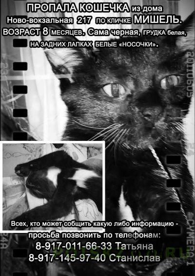 Пропала кошка г.Самара