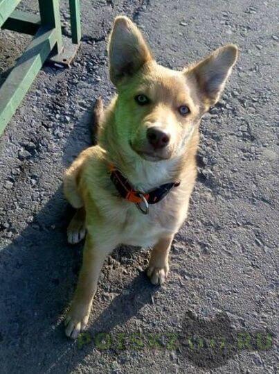 Найдена собака г.Домодедово