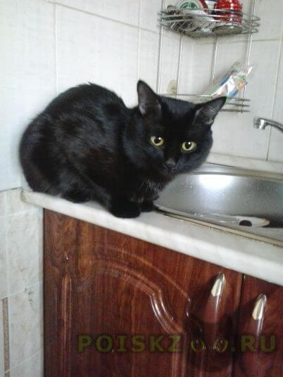 Пропал кот г.Ижевск