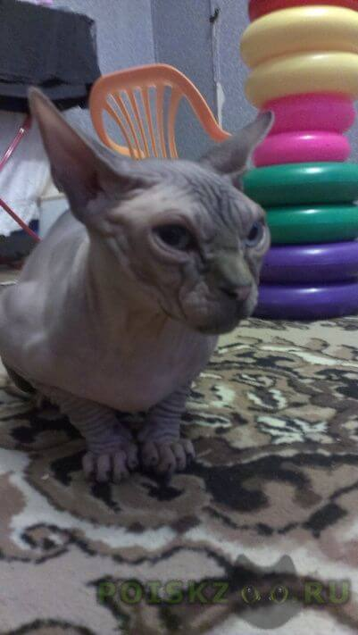 Найден кот г.Железнодорожный (Московск.)