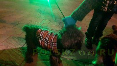 Найдена собака кобель на ул. береговая нашли собаку г.Ростов-на-Дону