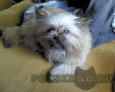 Пропала собака г.Калининград (Кенигсберг)