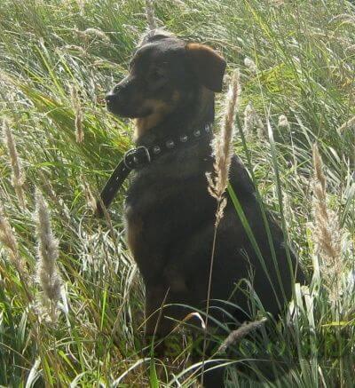 Пропала собака кобель г.Кстово