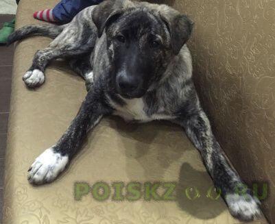 Пропала собака кобель  просим помощи в поиске животного г.Ногинск
