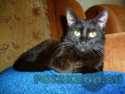 Пропала кошка г.Рязань