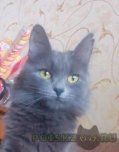 Пропала кошка г.Тула