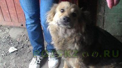 Найдена собака в декабре 2014 года г.Москва