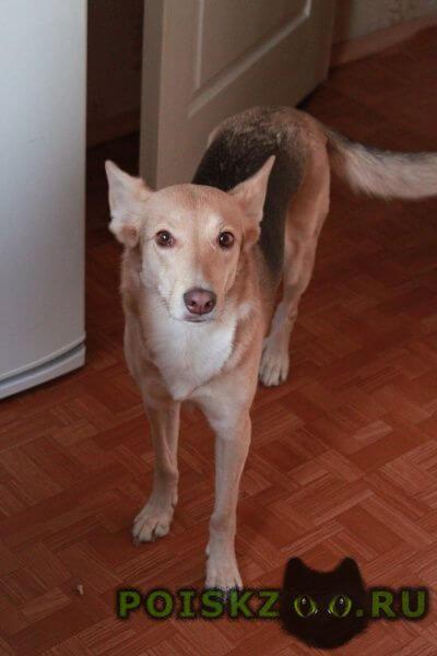 Пропала собака может быть в тамбовской обл. г.Липецк
