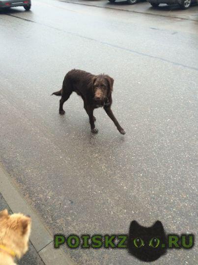 Найдена собака г.Луга