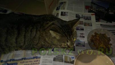Найден кот  г.Зеленоград