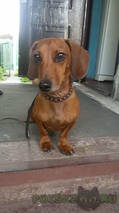 Найдена собака кобель мальчик г.Магнитогорск