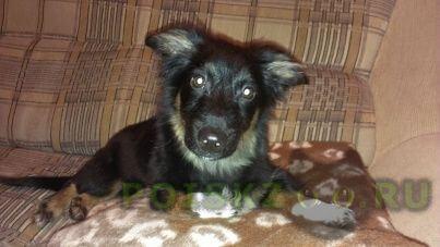Найдена собака кобель ( ) г.Пенза