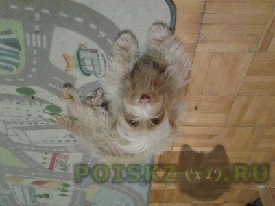 Найдена собака кобель г.Шлиссельбург
