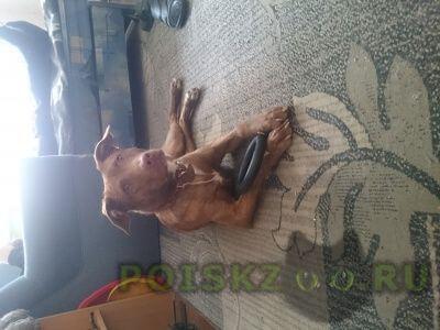 Найдена собака отдадим в хорошие руки г.Щербинка