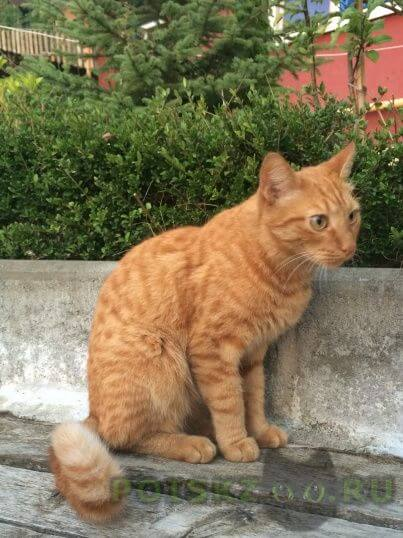 Пропал кот 12 ноября г.Сочи