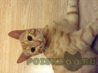 Найден кот рыжий г.Москва