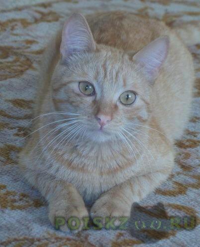 Пропал кот рыжий г.Пермь