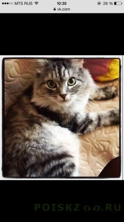 Пропало домашнее животное кот г.Магнитогорск