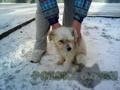 Найдена собака на ом рабочем остановка нефтебаза, магазин красный яр г.Красноярск