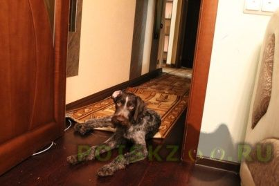 Пропала собака кобель г.Дмитров