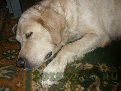 Найдена собака г.Тула