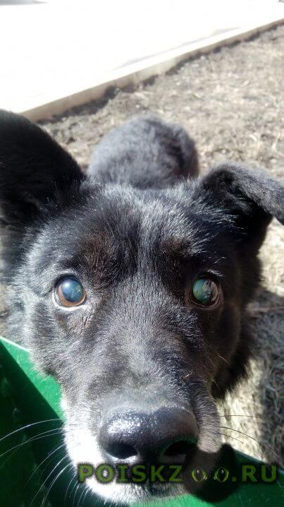 Найдена собака кобель ищу хозяина г.Кемерово