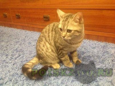 Найден кот наталья г.Воронеж