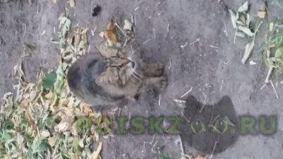 Найдена кошка г.Калуга