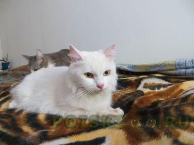 Найдена кошка белоснежная красавица г.Королев
