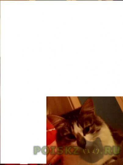 Пропала кошка г.Оренбург